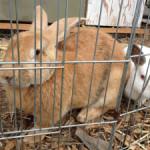 El Niño: Protect garden pets