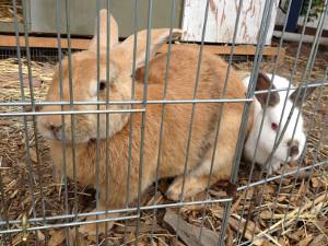 bunnies 300w