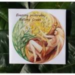 Evening primrose 'Ballona Creek'