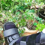Gardening on Crutches