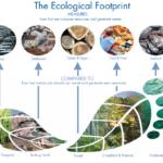 Biocapacity